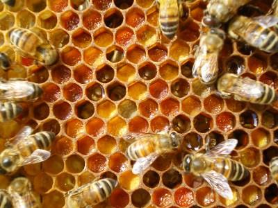 api-alveare-400